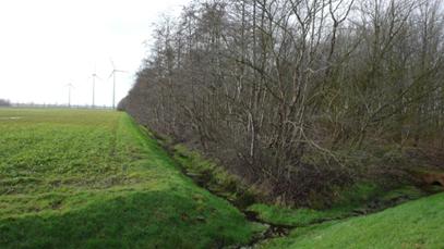 Rütenbrocker Moor