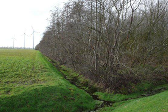 Rüttenbrocker Moor